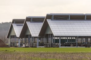 The Basics of Hog Farm Cleaning with Pressure Washing Equipment